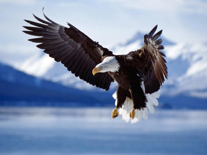 Vai aprender a bater asas ou ficar aí com medinho?