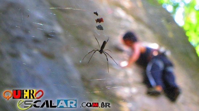 """Aranhas """"RIGANTES"""" né Raul?"""