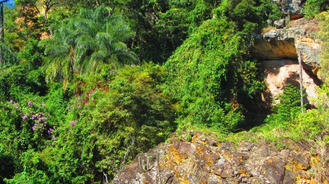 Comecinho do setor floresta